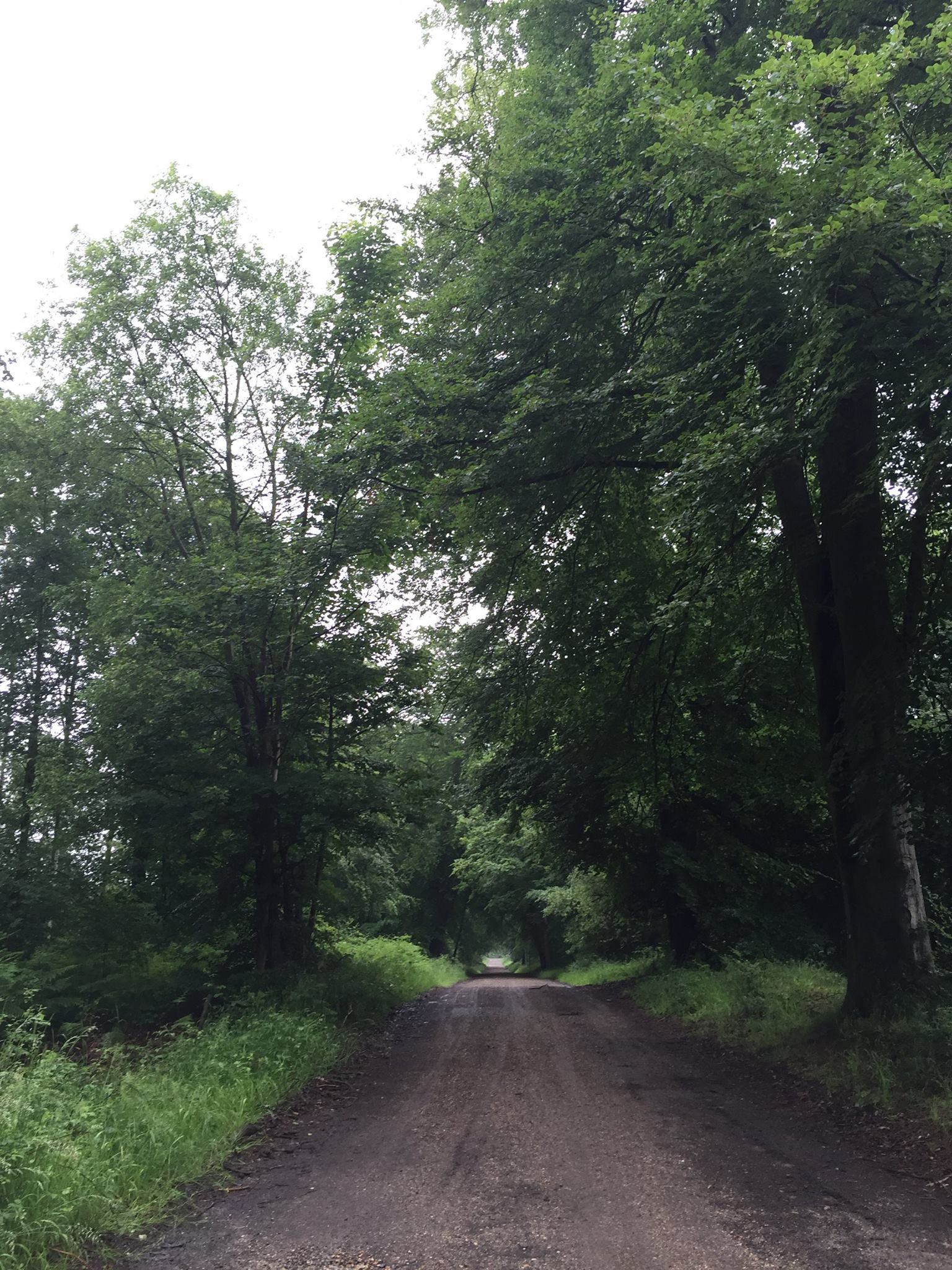 The race course through Savernake Forest